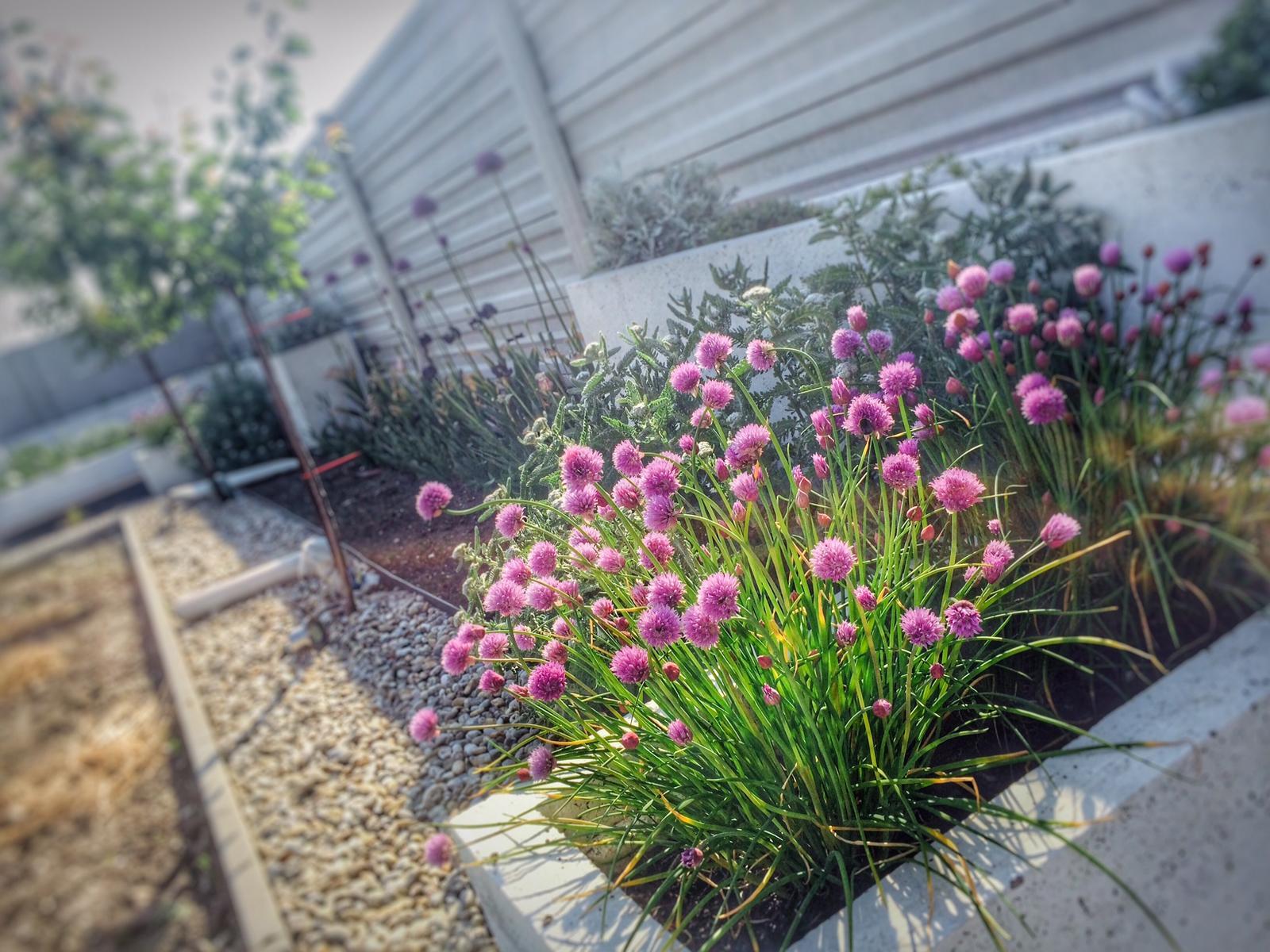 Modern Garden Linear324 - naša prímorská - zatial ziadna zmena u nas.. praca zamestnava viac ako by bolo vhode a dalo by sa nieco urobit na zahrade :((