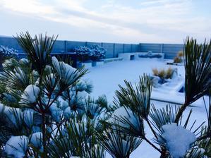 skore rano... samozrejme zamrznute rano, tak ako aj dalsich XY tyzdnov vrrrr