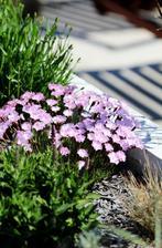 vonaju na celu zahradu :)