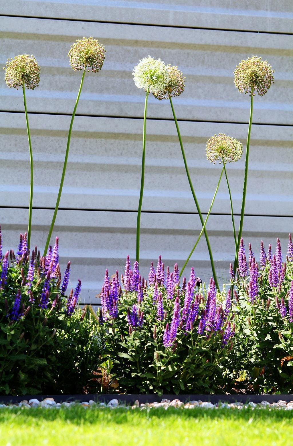 Modern Garden Linear324 - naša prímorská - Obrázok č. 136