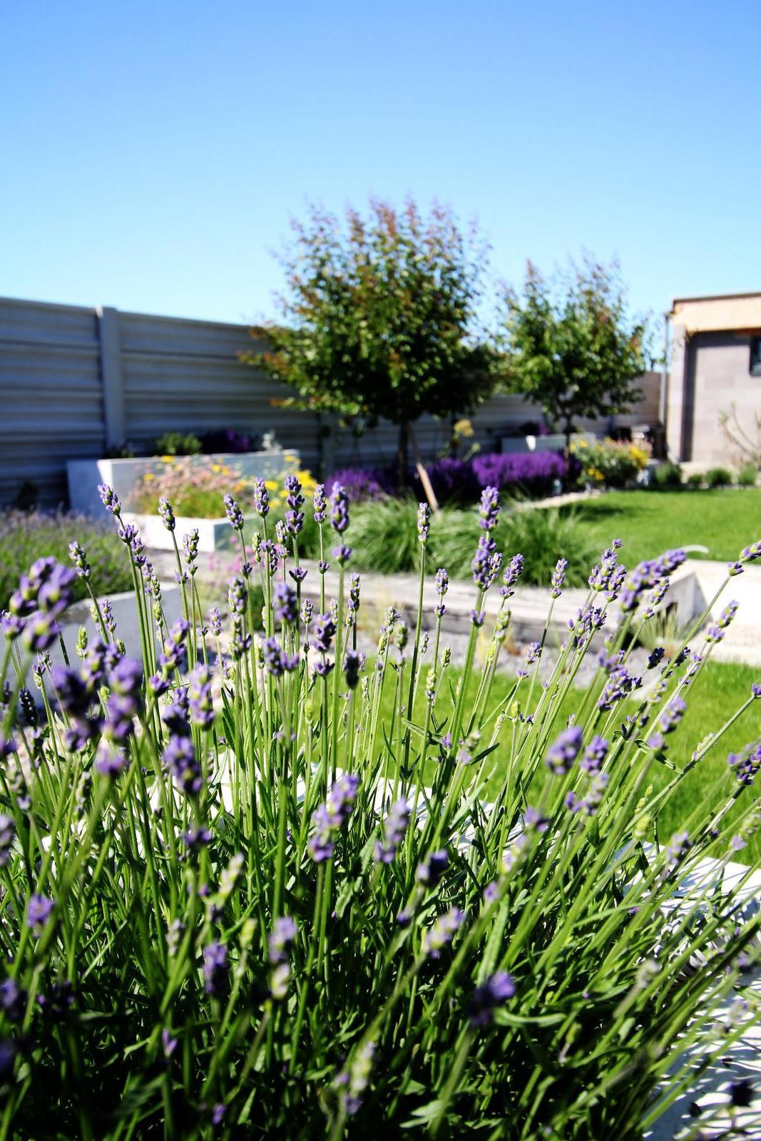 Modern Garden Linear324 - naša prímorská - Obrázok č. 141