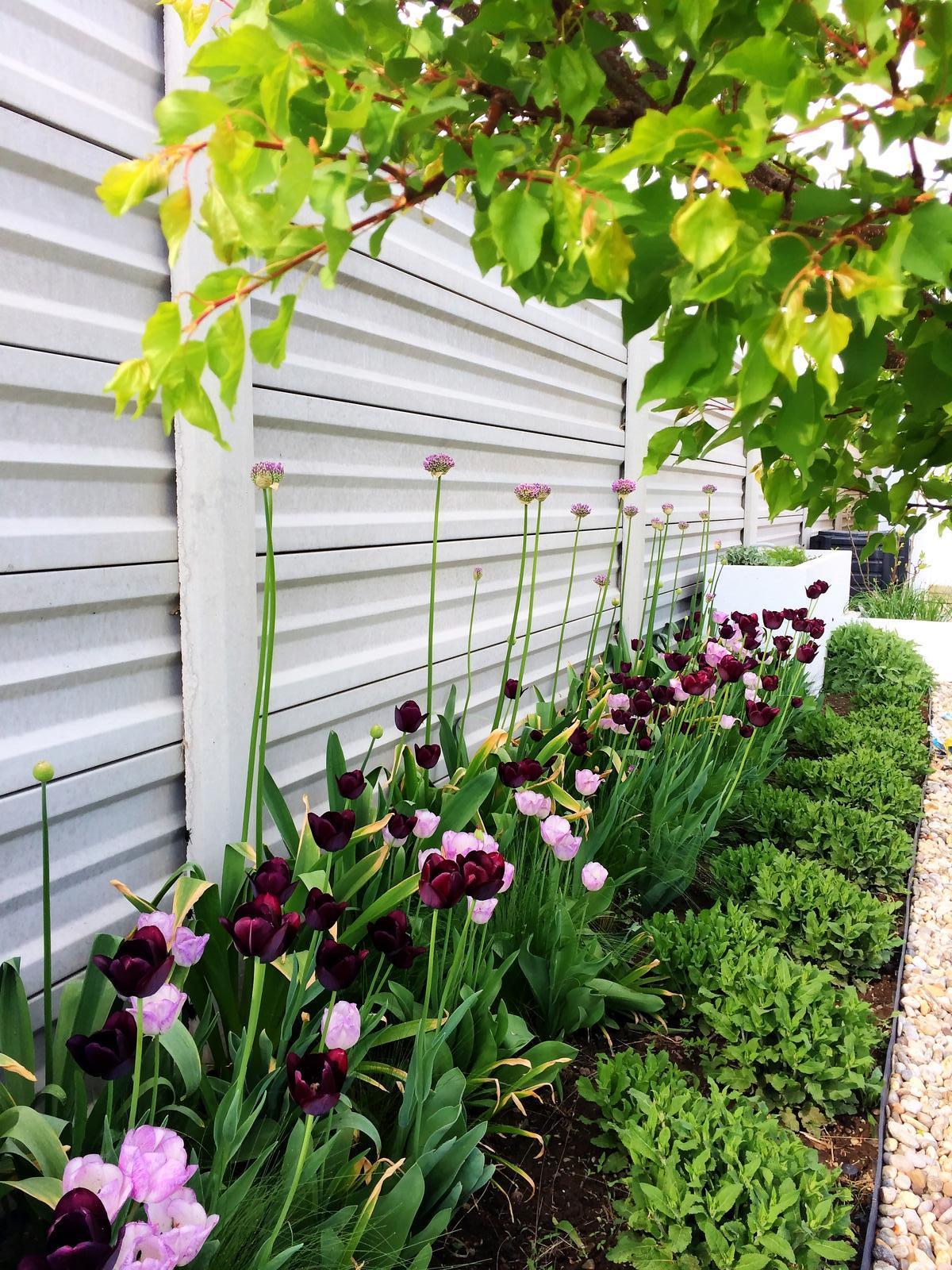 Modern Garden Linear324 - naša prímorská - ooobr cesnaky a salvie cakaju na svoju chvilu :)