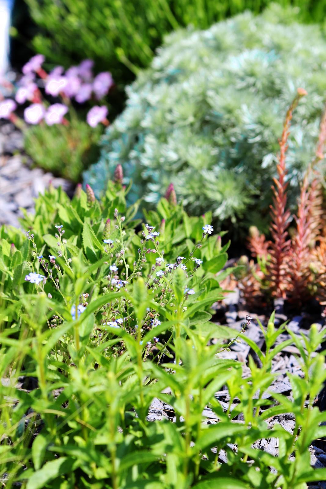Modern Garden Linear324 - naša prímorská - posledne co pribudlo je Nezabudka.... som zvedavy dalsi rok ako sa rozrastie