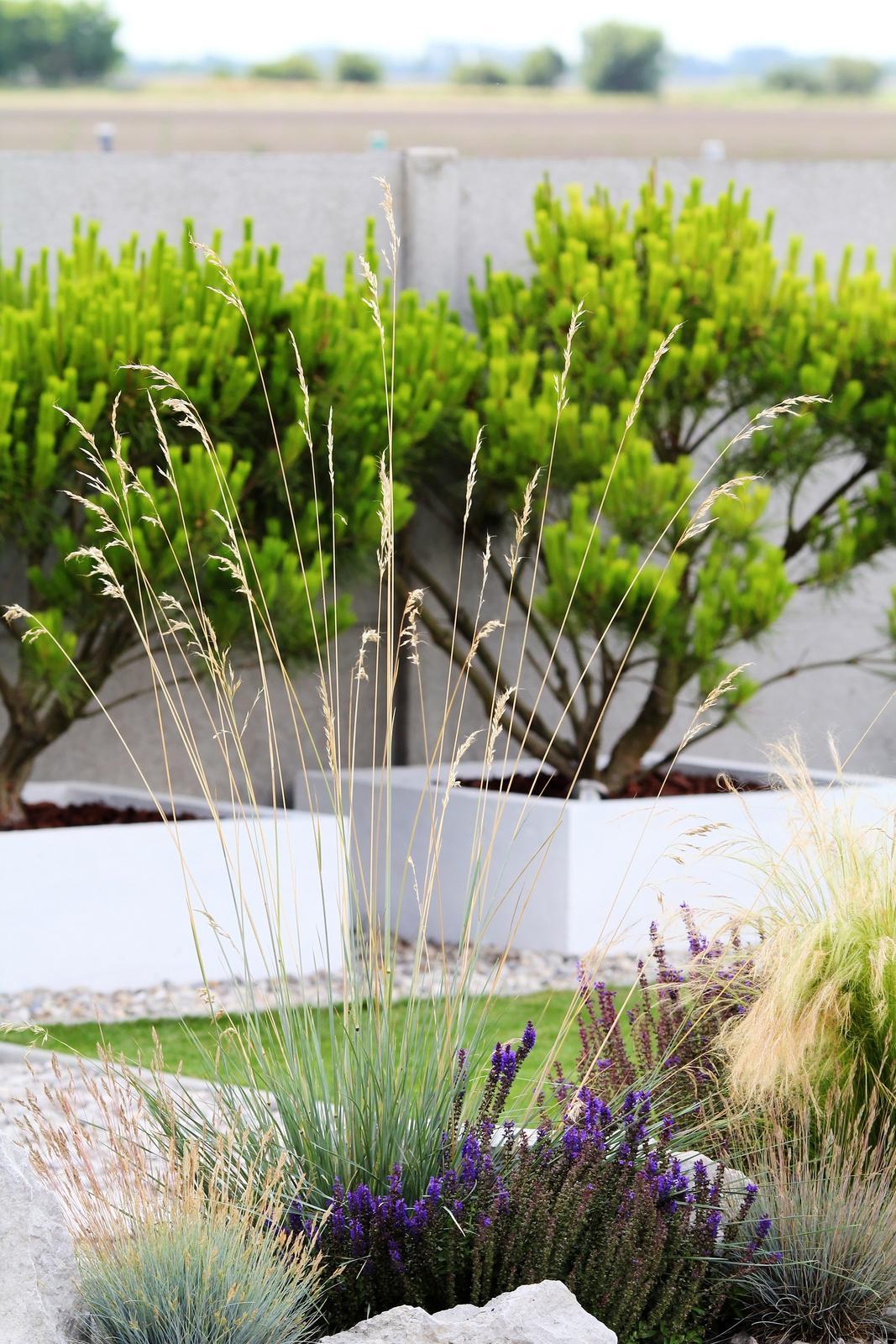Modern Garden Linear324 - naša prímorská - Obrázok č. 168