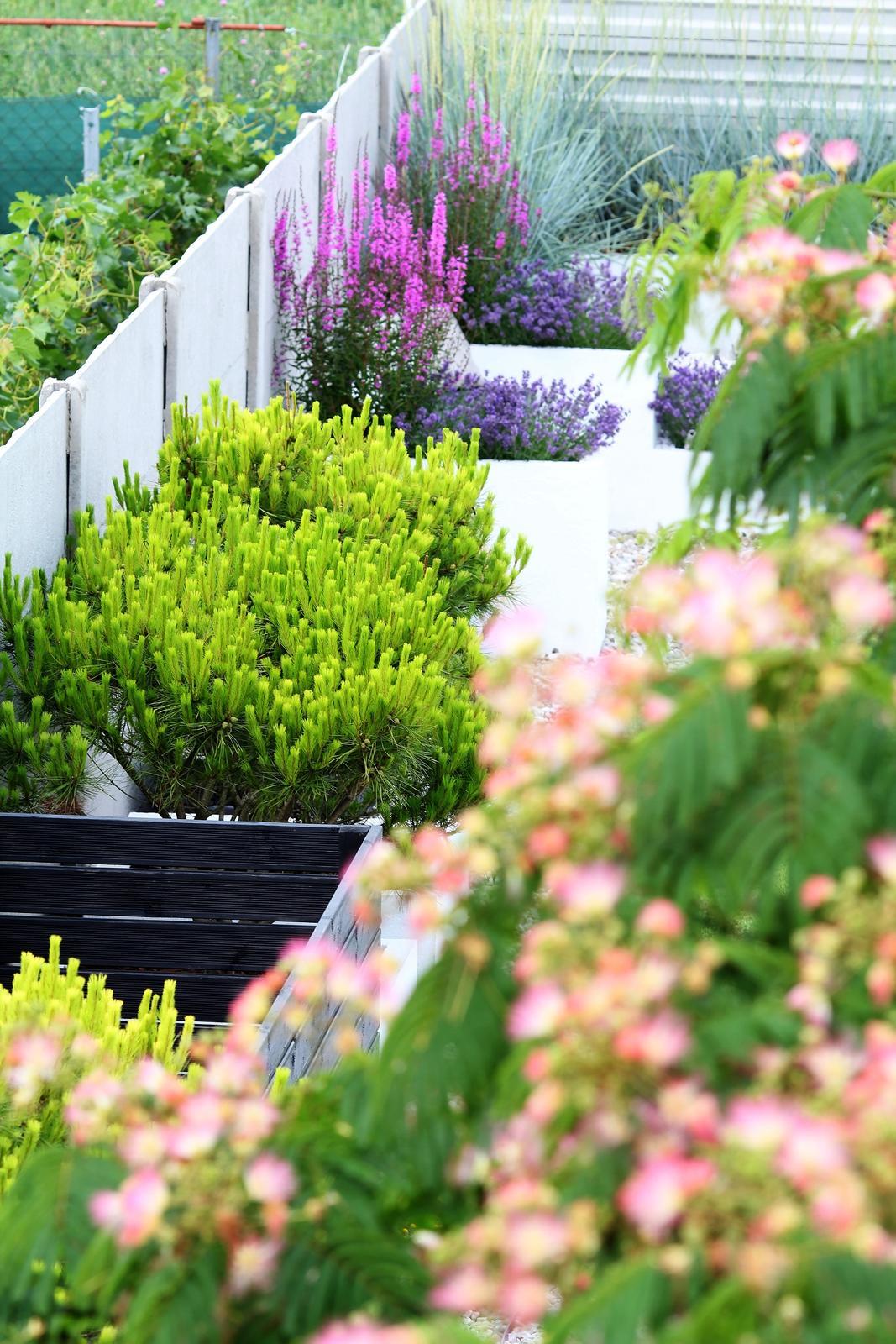 Modern Garden Linear324 - naša prímorská - milujem tie borovice ...podla mna najkrajsi prvok