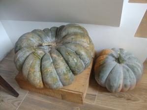 muškátové dýně- vypěstované ze semínka, největší má průměr 40 cm, ještě 4 čekají na sklizení, takže nebudeme asi jíst nic jiného než dýně :)