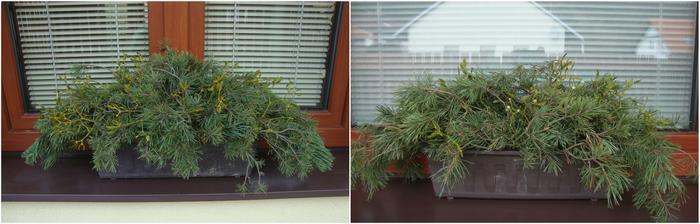 truhlíky vypíchané-co les dal :) , zdobit je budu někdy v týdnu
