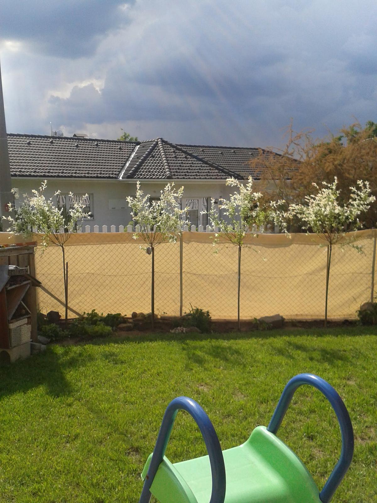 Venku (tam kde už to nevypadá jako staveniště) - nakonec jsem koupila 4, bude to takový živý plot nad plotem, abych odclonila souseda (foto po zasazení, před ostříháním)