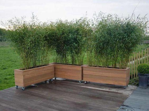 Ráda bych toto vyrobila na zastínění pergoly. Máte někdo bambusy v květináči? jak se jim daří? a přezimují takto venku? - Obrázek č. 1