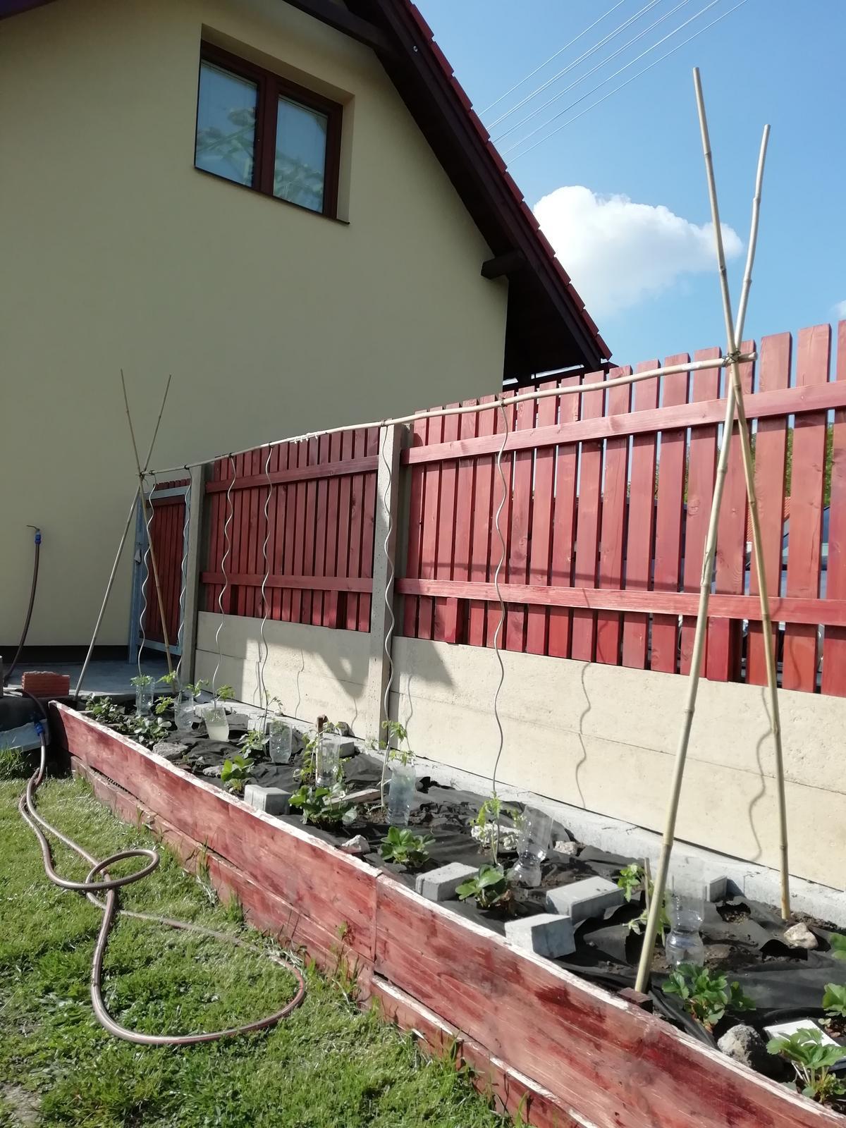Venku (tam kde už to nevypadá jako staveniště) - Rajčata a jahody