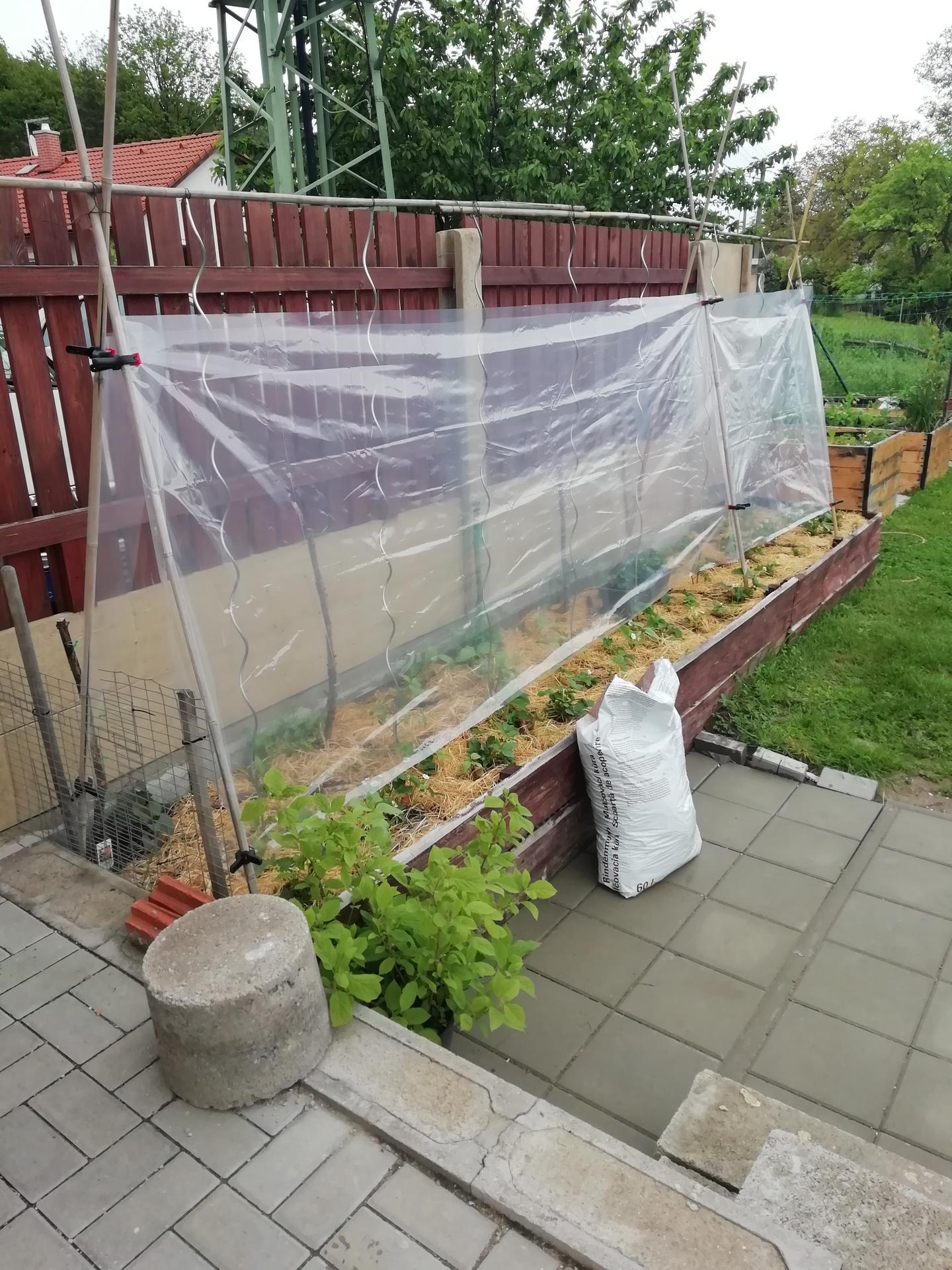 2021 Doma i venku - Snad to rajčatům pomůže, zatím moc nerostou.