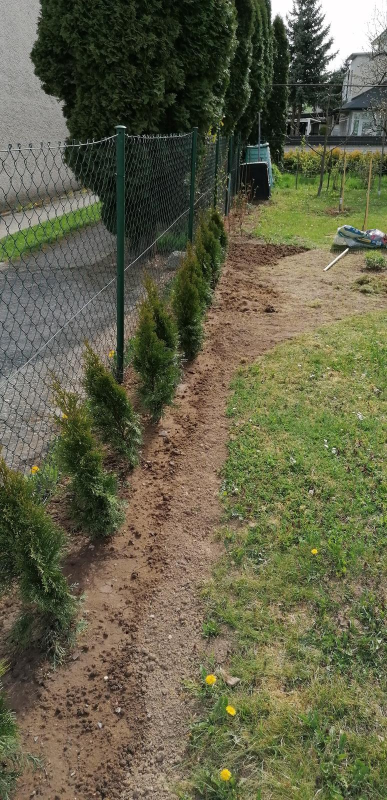 """Naše malé """"pole neorané"""" :o) záhradka 2. rok - Zasadili sme k plotu tuje, snáď časom zabezpečia trošku súkromia..."""