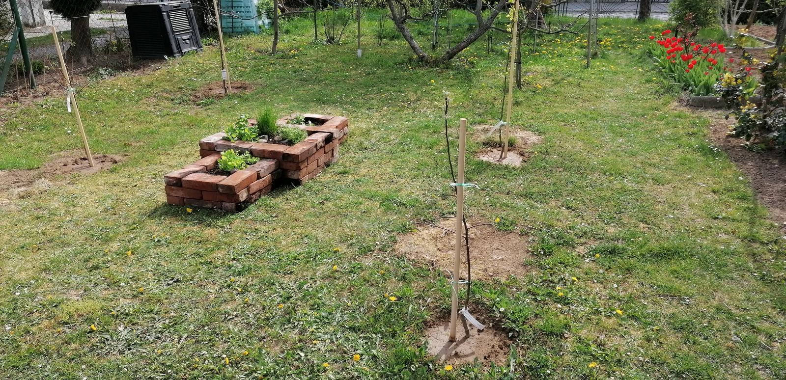 """Naše malé """"pole neorané"""" :o) záhradka 2. rok - ...opäť sme sadili nové stromčeky..."""