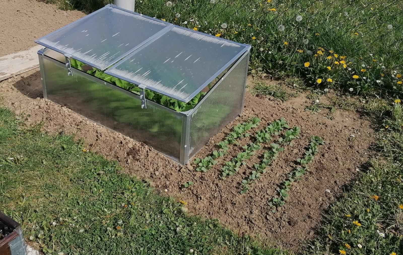 """Naše malé """"pole neorané"""" :o) záhradka 2. rok - ... a parenisko z Lídla ..."""