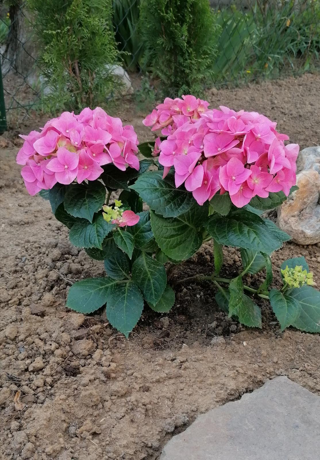 """Naše malé """"pole neorané"""" :o) záhradka 2. rok - Obrázok č. 24"""
