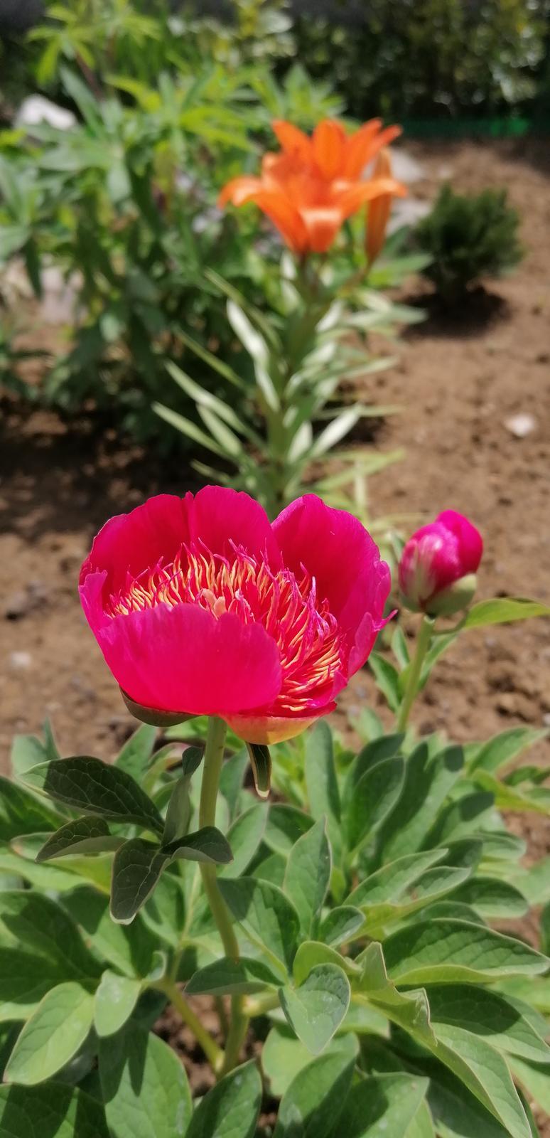 """Naše malé """"pole neorané"""" :o) záhradka 2. rok - Obrázok č. 26"""
