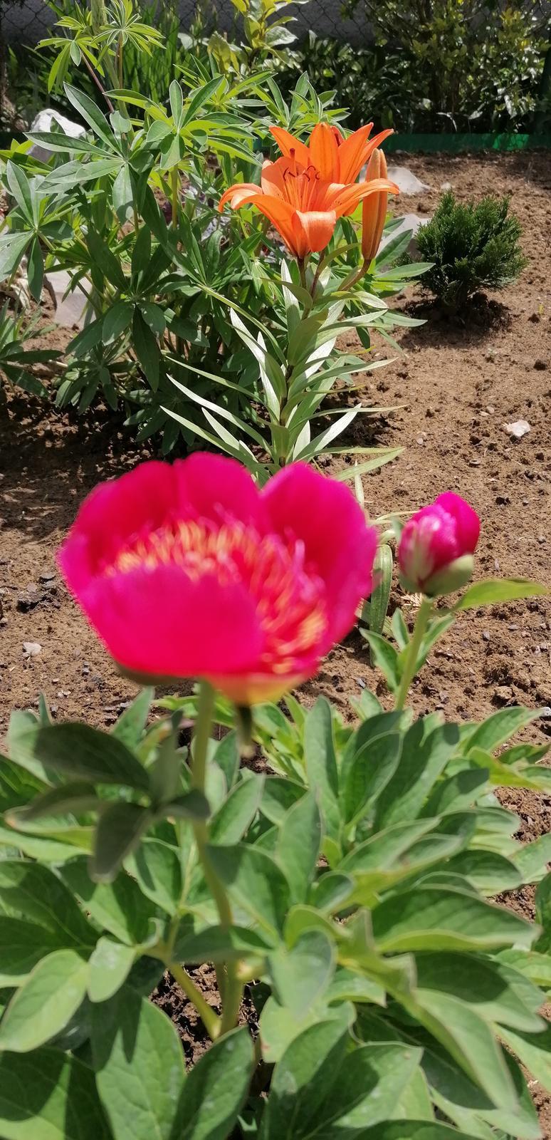 """Naše malé """"pole neorané"""" :o) záhradka 2. rok - Obrázok č. 27"""