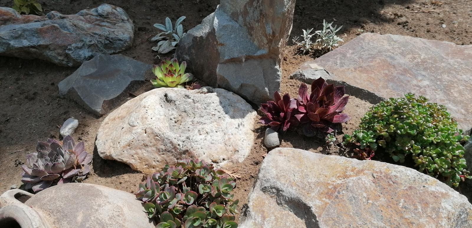 """Naše malé """"pole neorané"""" :o) záhradka 2. rok - Obrázok č. 29"""