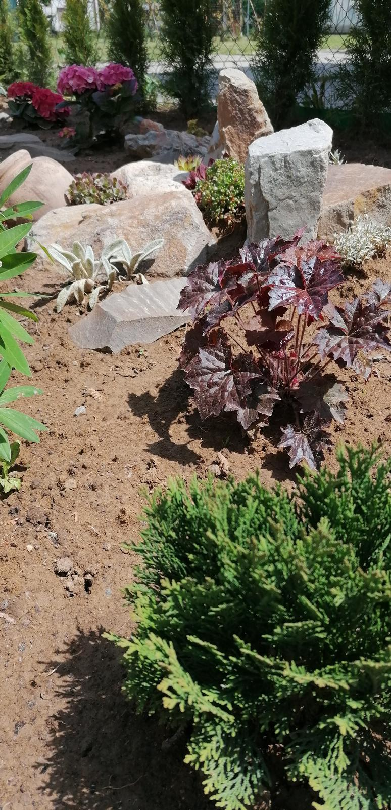 """Naše malé """"pole neorané"""" :o) záhradka 2. rok - Obrázok č. 32"""