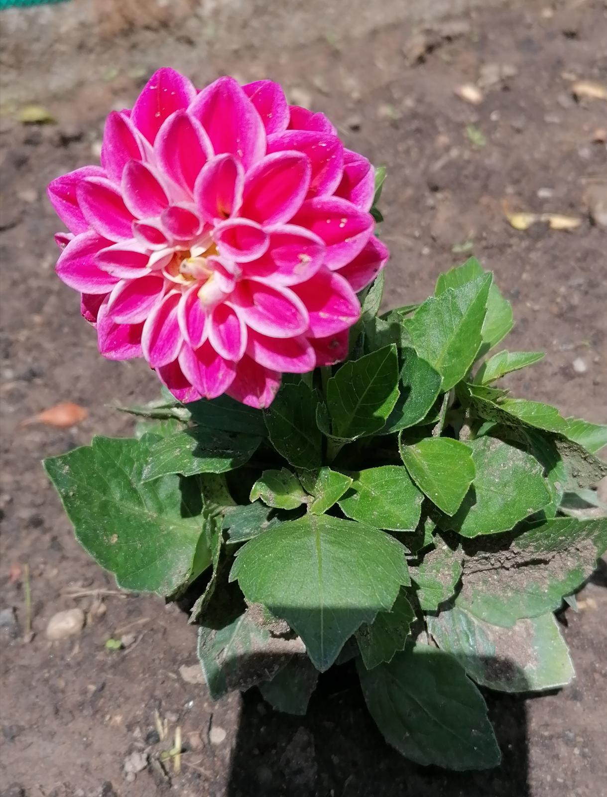 """Naše malé """"pole neorané"""" :o) záhradka 2. rok - Obrázok č. 33"""