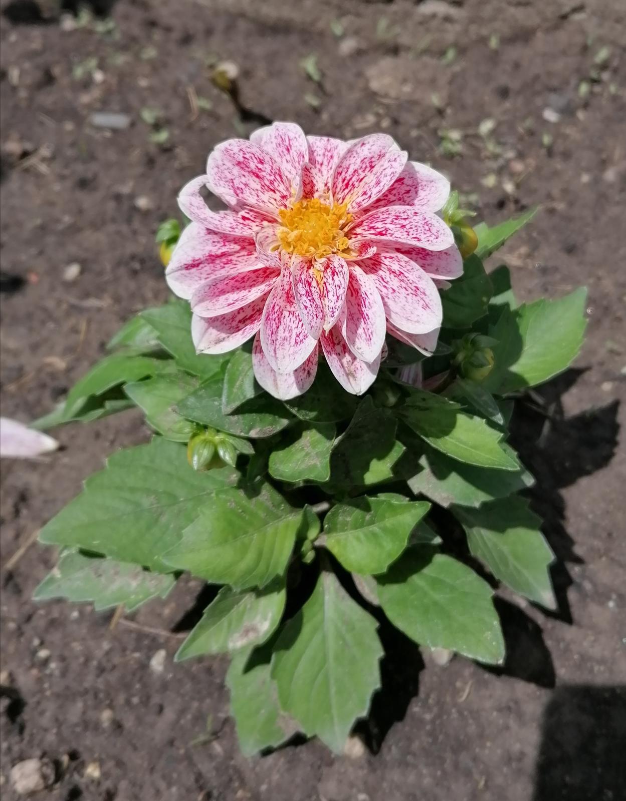 """Naše malé """"pole neorané"""" :o) záhradka 2. rok - Obrázok č. 34"""