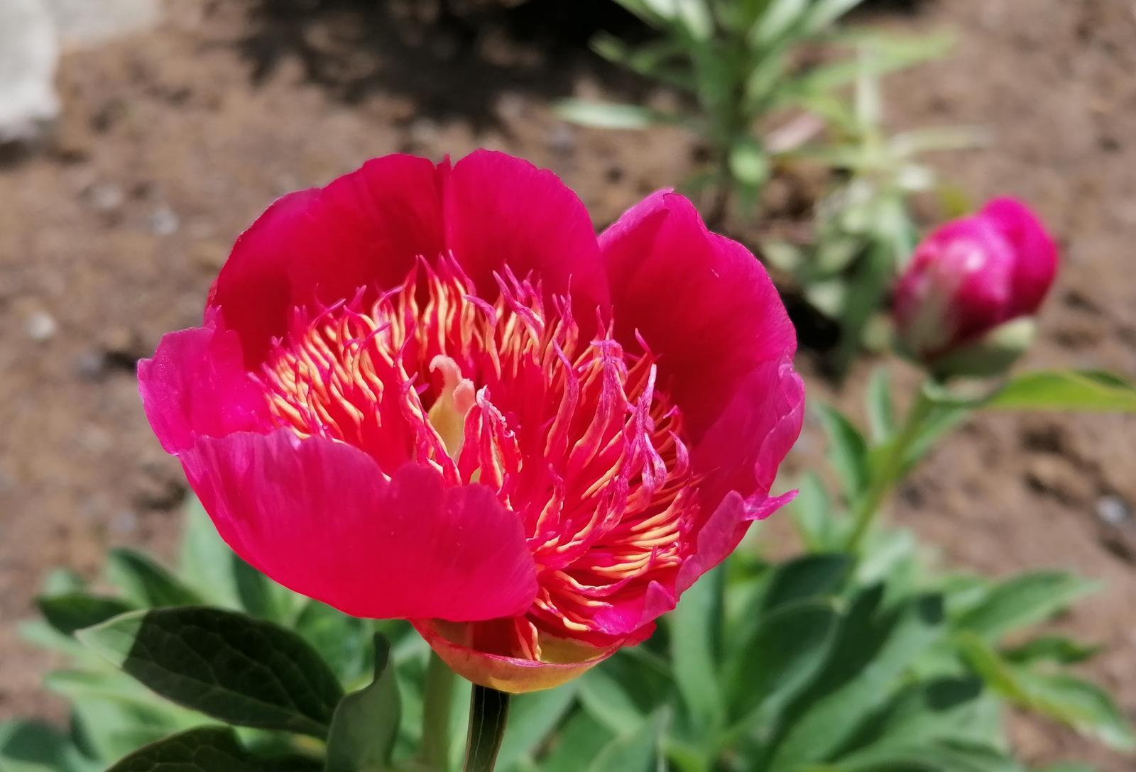 """Naše malé """"pole neorané"""" :o) záhradka 2. rok - Obrázok č. 36"""