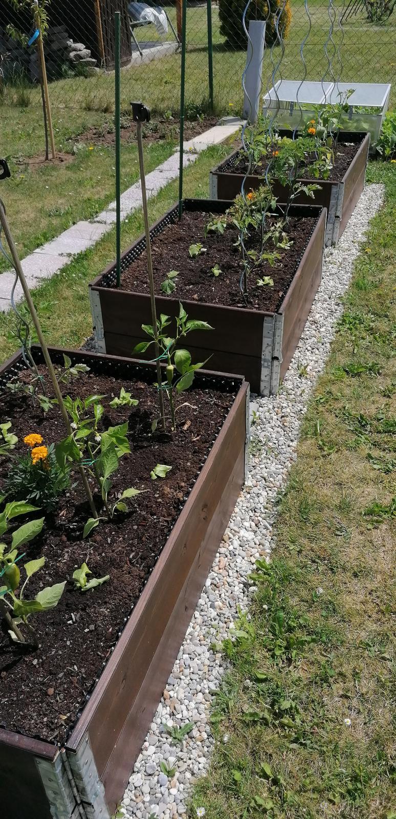 """Naše malé """"pole neorané"""" :o) záhradka 2. rok - Obrázok č. 38"""