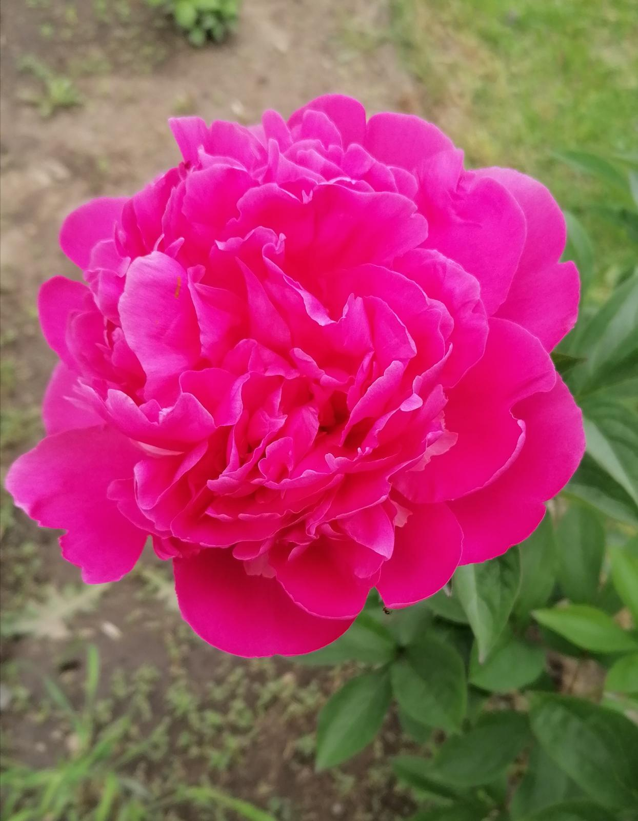 """Naše malé """"pole neorané"""" :o) záhradka 2. rok - Obrázok č. 46"""