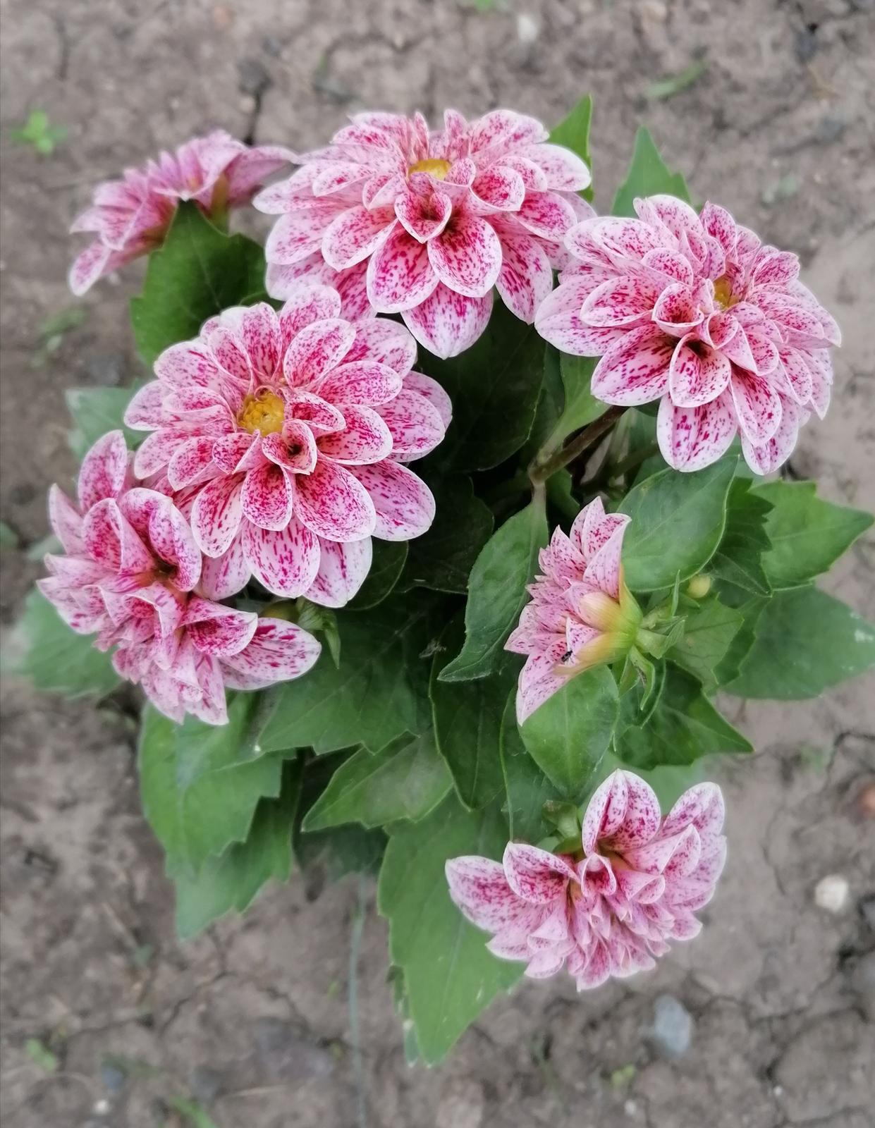 """Naše malé """"pole neorané"""" :o) záhradka 2. rok - Obrázok č. 47"""