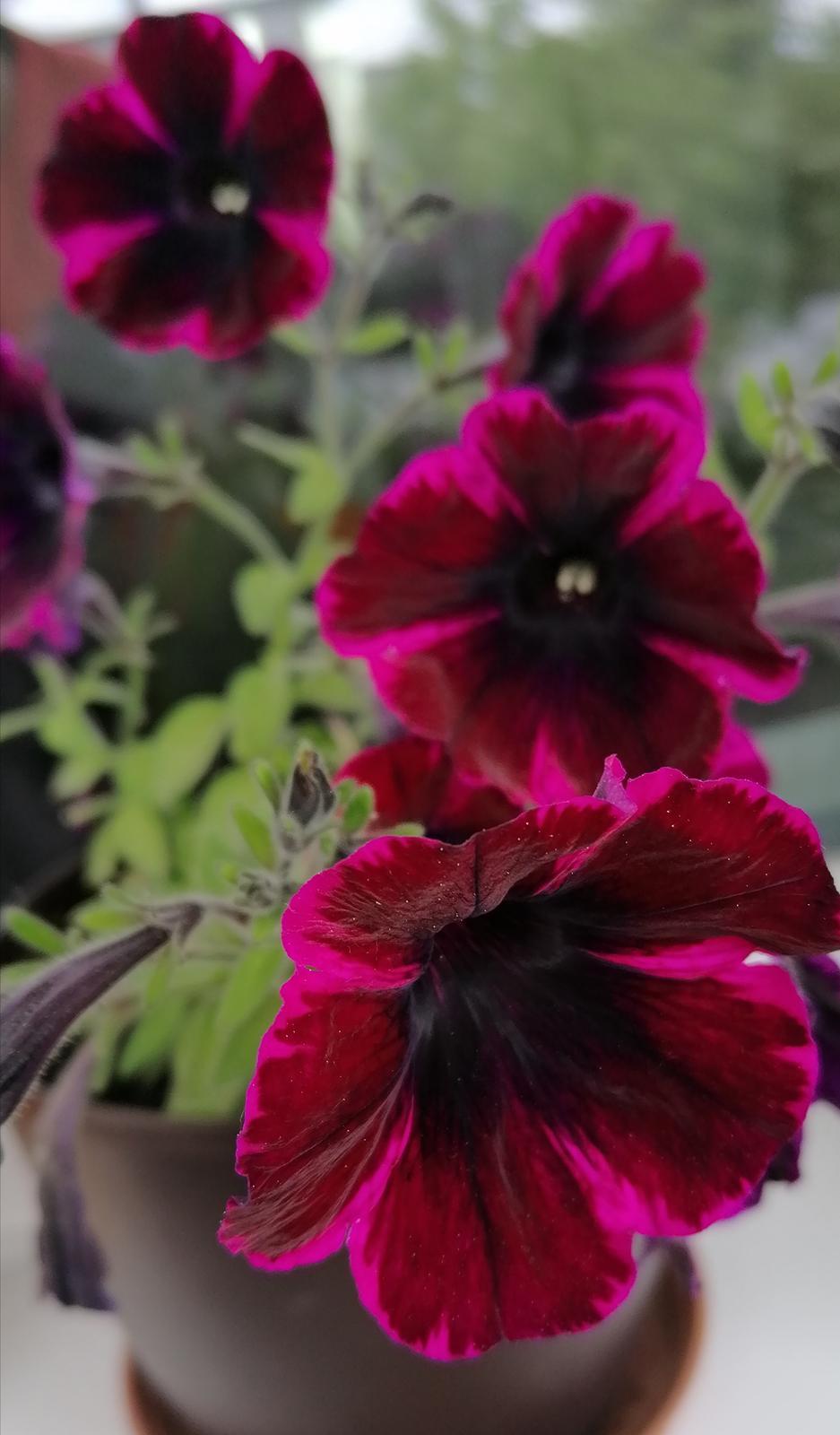 """Naše malé """"pole neorané"""" :o) záhradka 2. rok - Obrázok č. 50"""