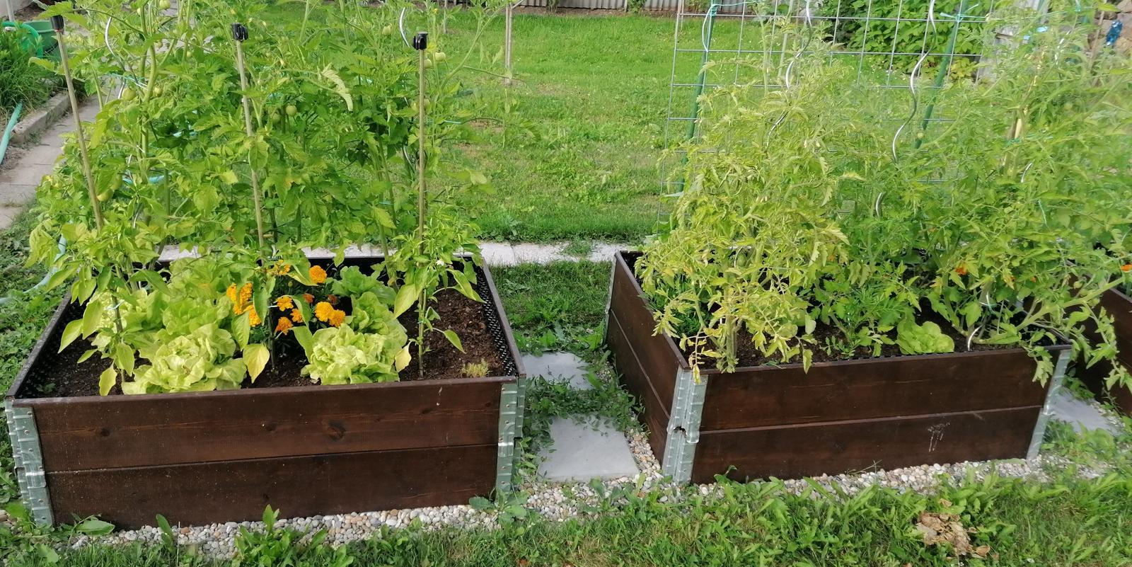 """Naše malé """"pole neorané"""" :o) záhradka 2. rok - Obrázok č. 52"""