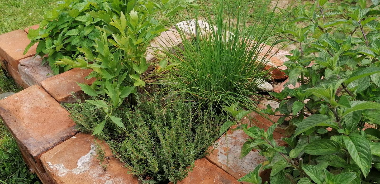 """Naše malé """"pole neorané"""" :o) záhradka 2. rok - Obrázok č. 62"""