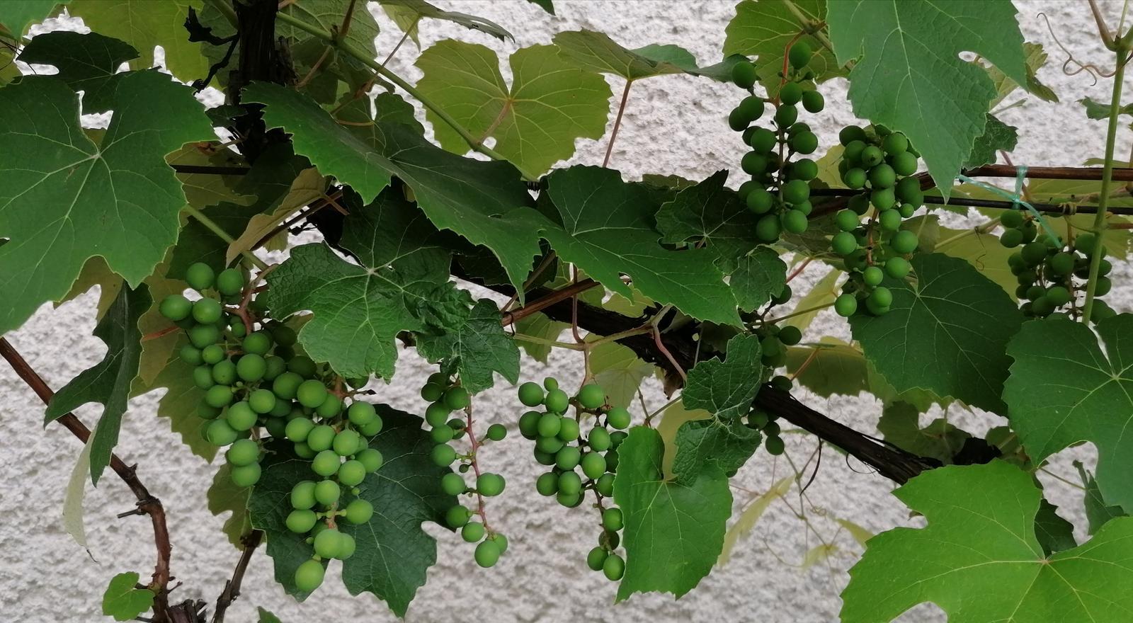 """Naše malé """"pole neorané"""" :o) záhradka 2. rok - Obrázok č. 70"""