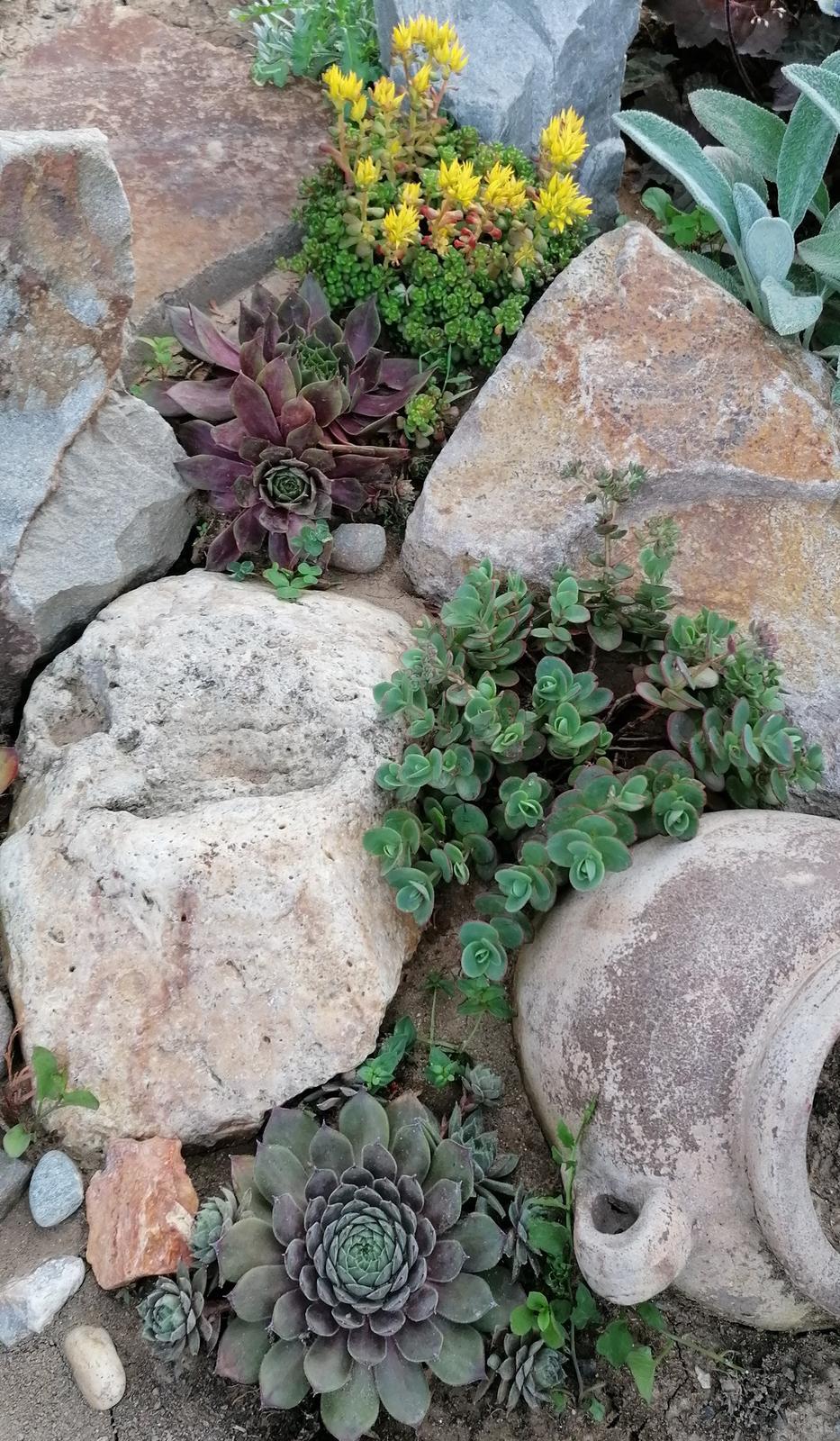 """Naše malé """"pole neorané"""" :o) záhradka 2. rok - Obrázok č. 71"""