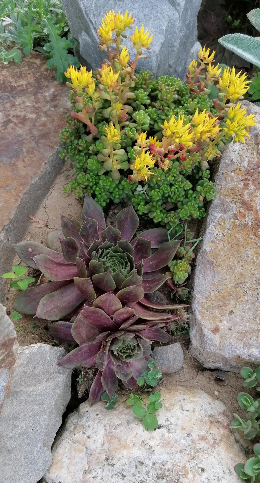 """Naše malé """"pole neorané"""" :o) záhradka 2. rok - Obrázok č. 72"""