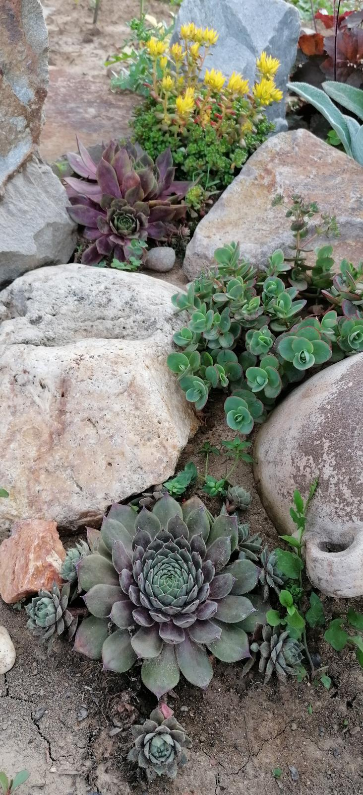 """Naše malé """"pole neorané"""" :o) záhradka 2. rok - Obrázok č. 73"""