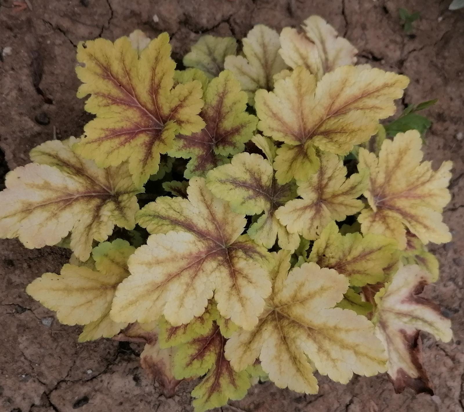"""Naše malé """"pole neorané"""" :o) záhradka 2. rok - Obrázok č. 75"""