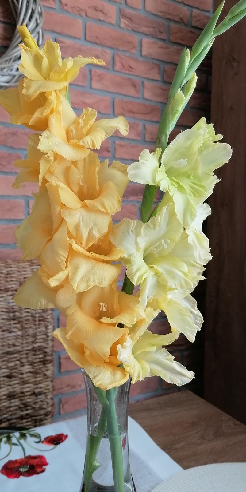 """Naše malé """"pole neorané"""" :o) záhradka 2. rok - Kvitnú postupne a vždy v inej farbe"""