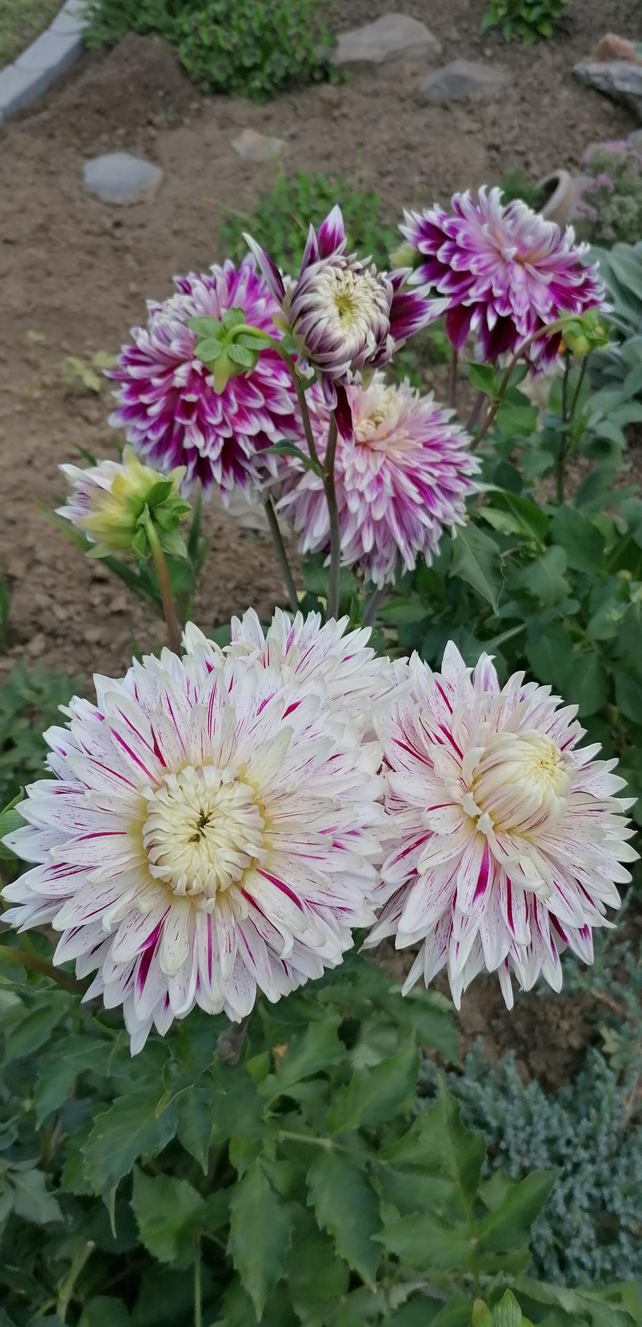 """Naše malé """"pole neorané"""" :o) záhradka 2. rok - Obrázok č. 91"""