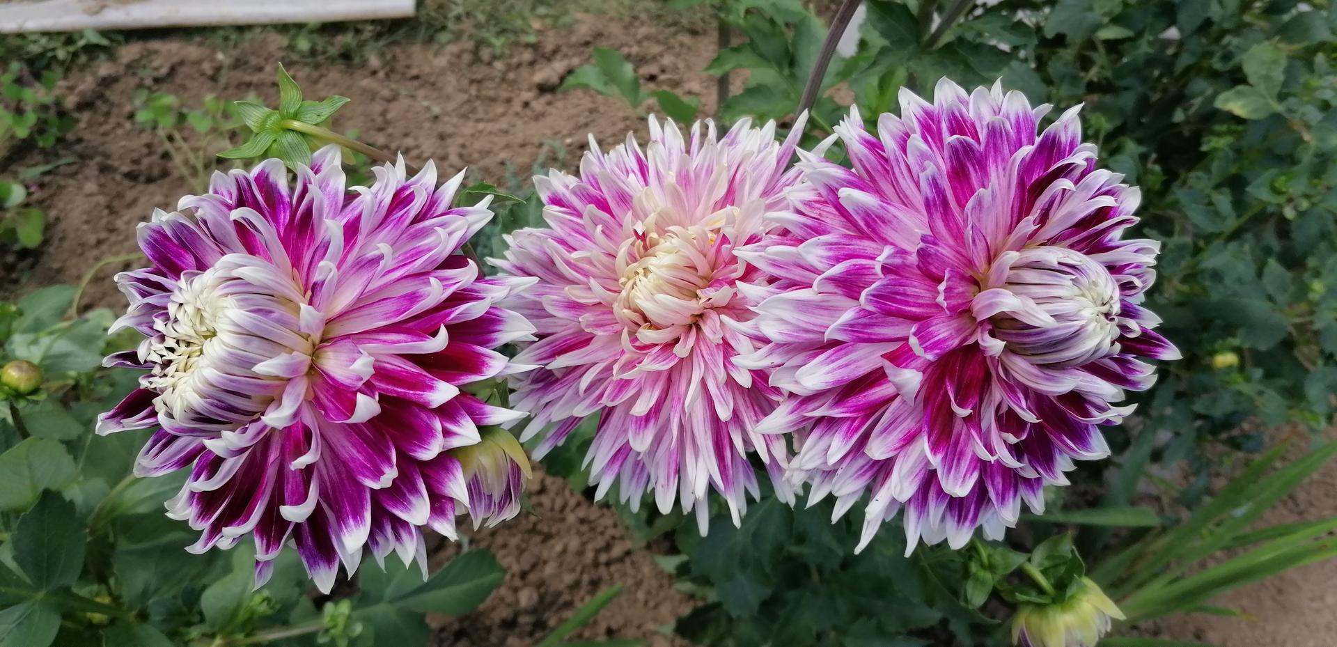 """Naše malé """"pole neorané"""" :o) záhradka 2. rok - Obrázok č. 93"""
