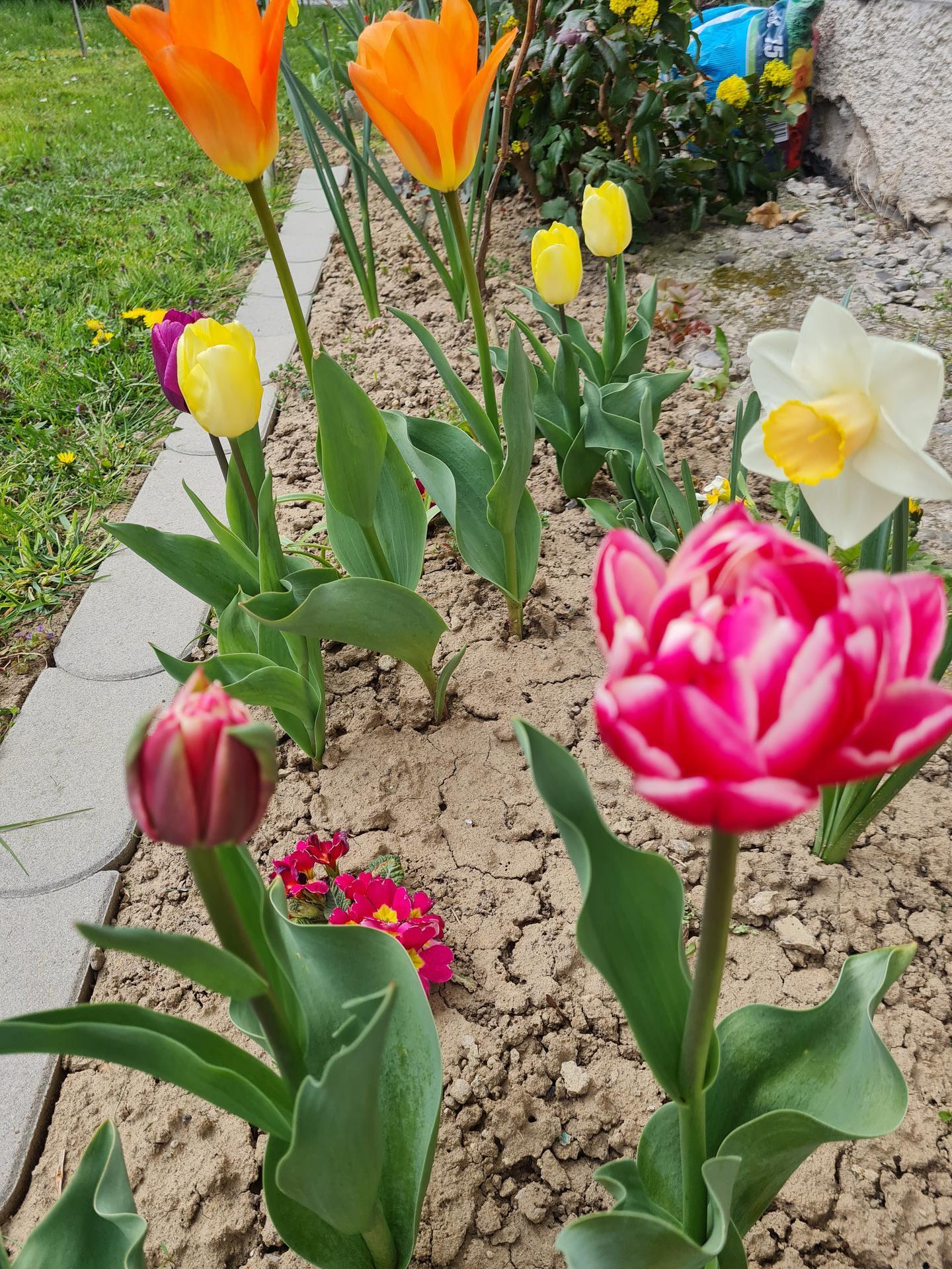 """Naše malé """"pole neorané"""" :o) záhradka 3. rok - Obrázok č. 6"""