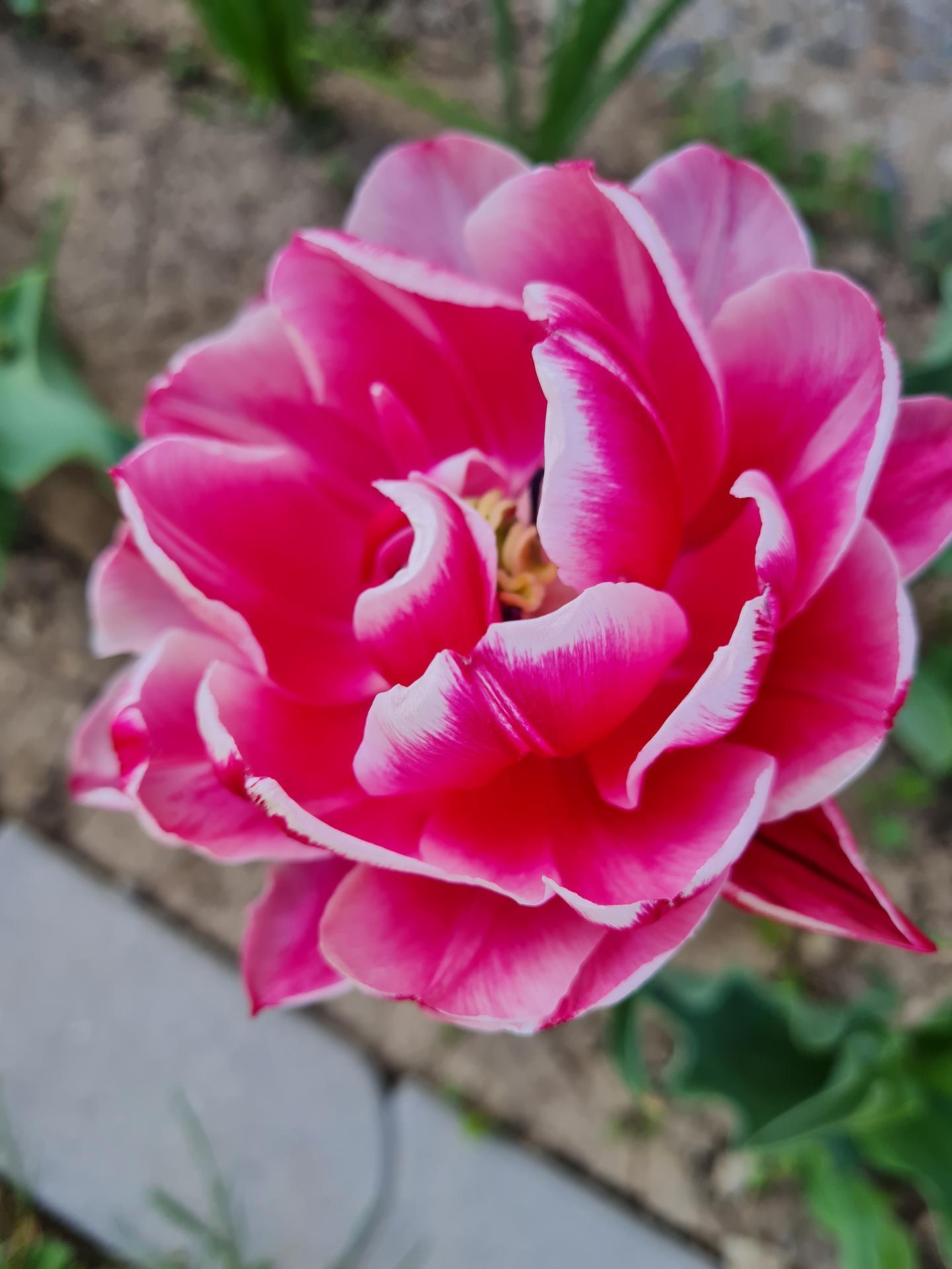 """Naše malé """"pole neorané"""" :o) záhradka 3. rok - Obrázok č. 8"""