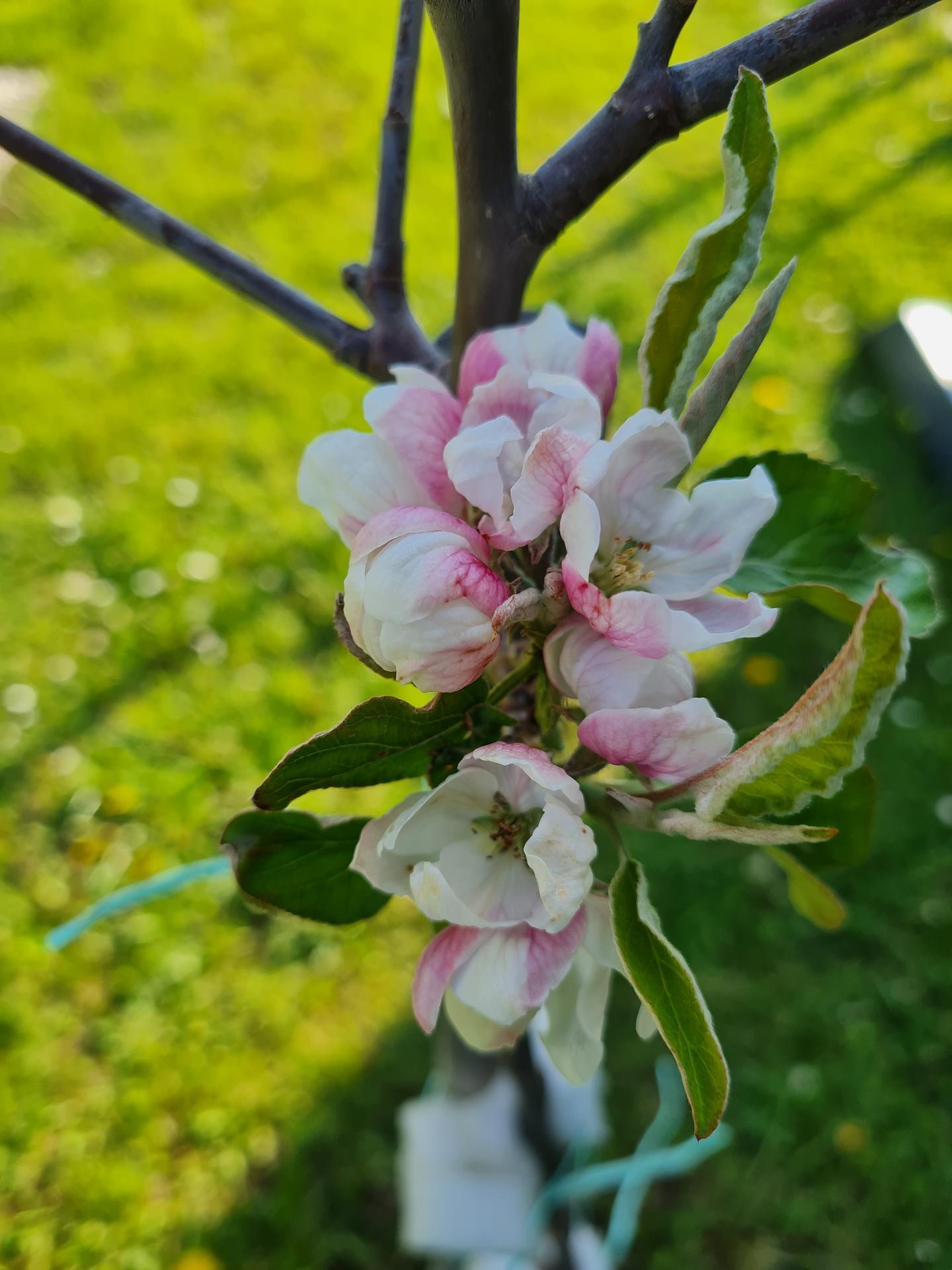 """Naše malé """"pole neorané"""" :o) záhradka 3. rok - Obrázok č. 11"""