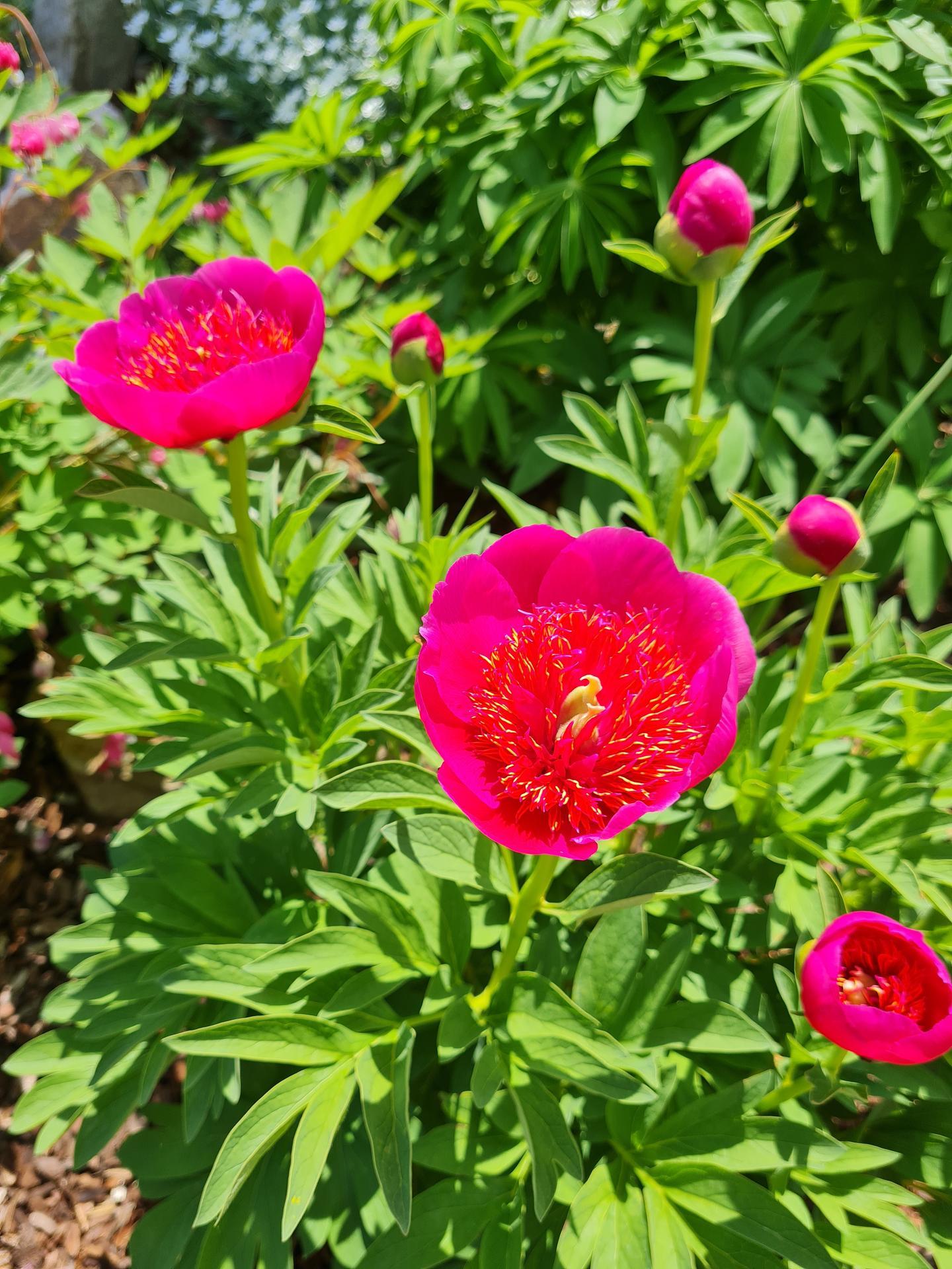 """Naše malé """"pole neorané"""" :o) záhradka 3. rok - Obrázok č. 17"""