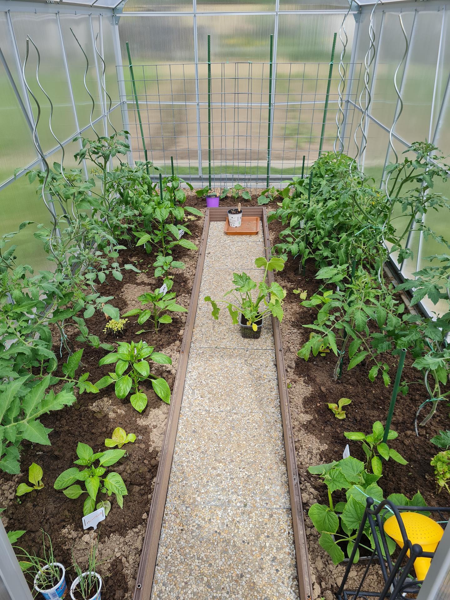 """Naše malé """"pole neorané"""" :o) záhradka 3. rok - ... v skleníku sa rastlinkám páči ..."""