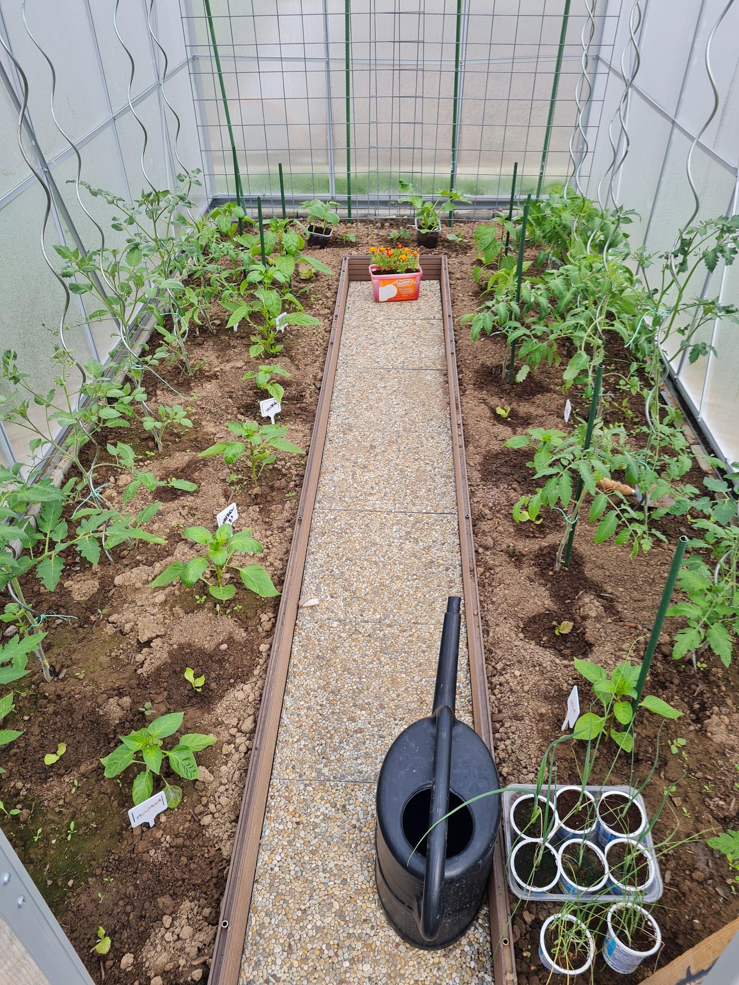"""Naše malé """"pole neorané"""" :o) záhradka 3. rok - ... paradajky a papriky, rôzne druhy... uvidíme ktoré sa osvedčia ..."""