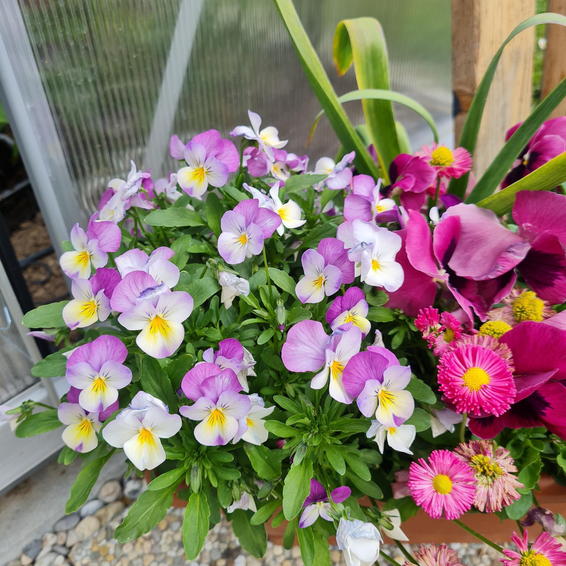 """Naše malé """"pole neorané"""" :o) záhradka 3. rok - Obrázok č. 26"""