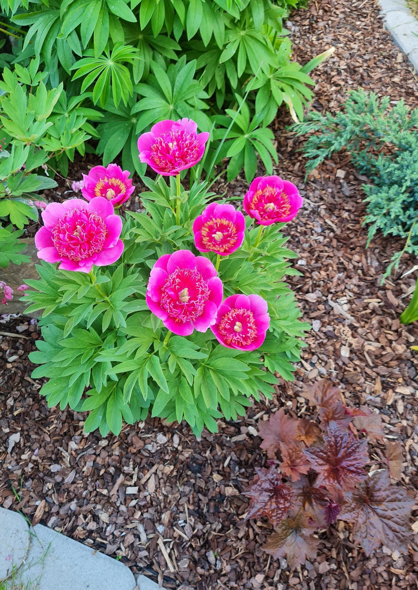 """Naše malé """"pole neorané"""" :o) záhradka 3. rok - Obrázok č. 39"""