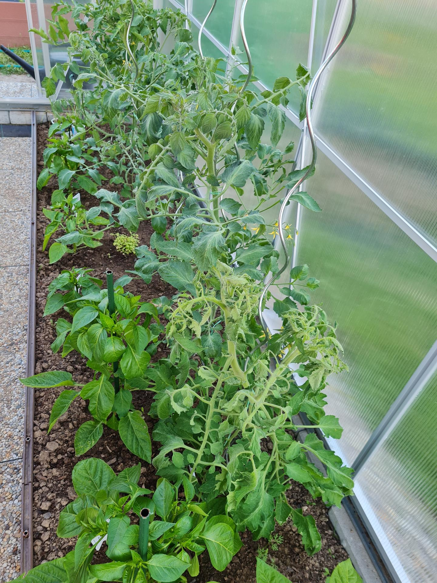 """Naše malé """"pole neorané"""" :o) záhradka 3. rok - ... už to skoro začína vyzerať ako džungľa ..."""