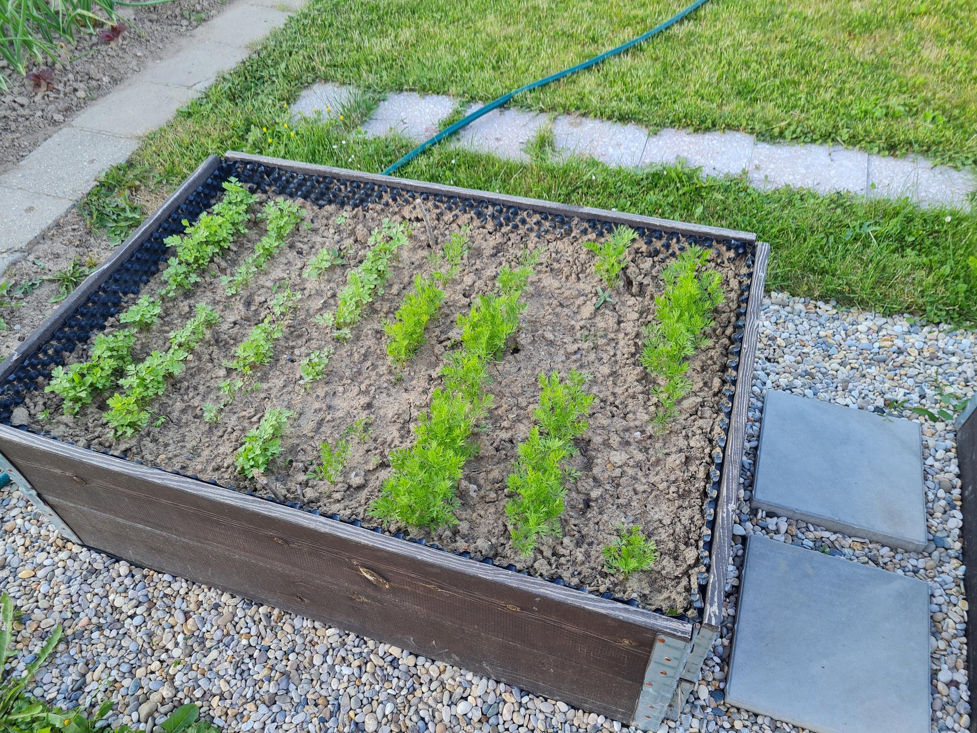 """Naše malé """"pole neorané"""" :o) záhradka 3. rok - Obrázok č. 32"""